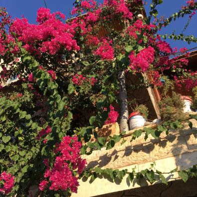 Flowers in Battir, a local town that is threatened by encroaching Israeli settlements.